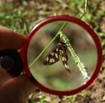 A magnifying glass is focused on a moth